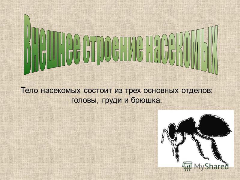 Тело насекомых состоит из трех основных отделов: головы, груди и брюшка.