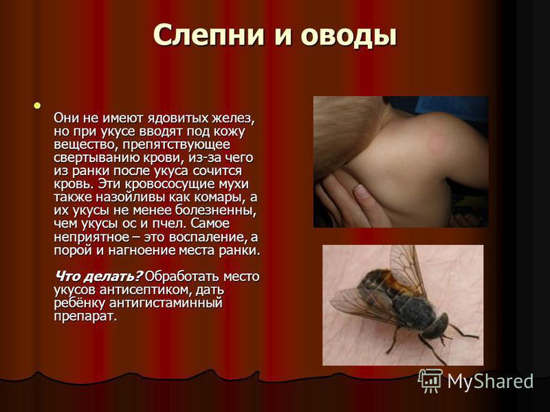Слепни и оводы Они не имеют ядовитых желез, но при укусе вводят под кожу вещество, препятствующее свертыванию крови, из-за чего из ранки после укуса сочится кровь. Эти кровососущие мухи также назойливы как комары, а их укусы не менее болезненны, чем