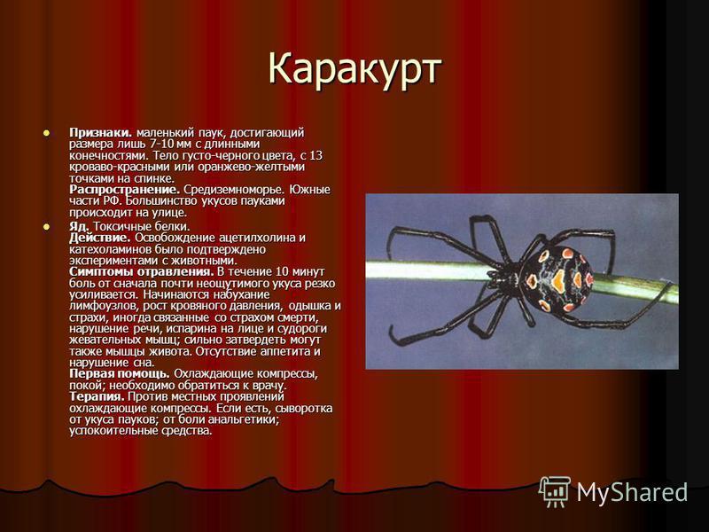 Каракурт Признаки. маленький паук, достигающий размера лишь 7-10 мм с длинными конечностями. Тело густо-черного цвета, с 13 кроваво-красными или оранжево-желтыми точками на спинке. Распространение. Средиземноморье. Южные части РФ. Большинство укусов