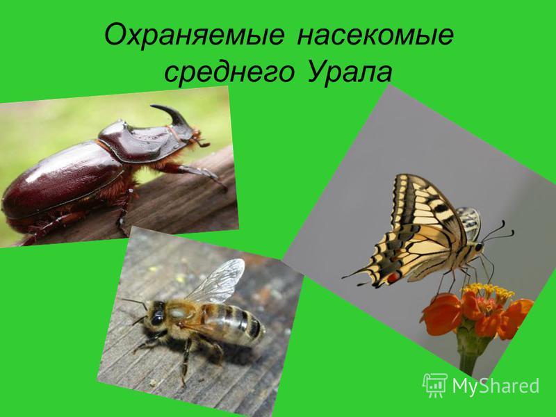 Охраняемые насекомые среднего Урала