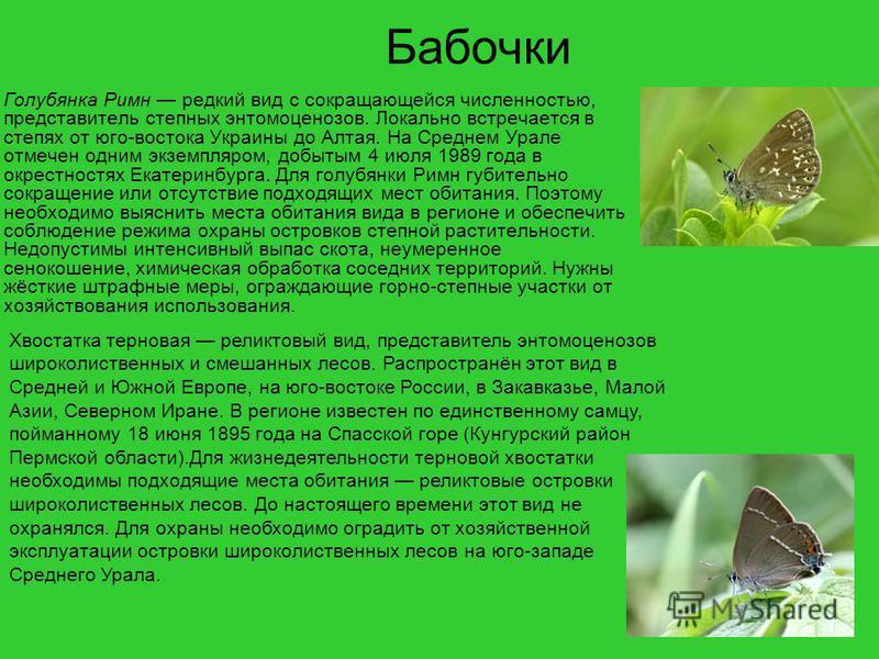 Бабочки Голубянка Римн редкий вид с сокращающейся численностью, представитель степных энтомоценозов. Локально встречается в степях от юго-востока Украины до Алтая. На Среднем Урале отмечен одним экземпляром, добытым 4 июля 1989 года в окрестностях Ек