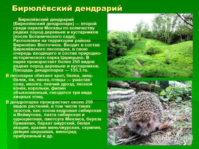 Бирюлёвский дендрарий Бирюлёвский дендрарий (Бирюлёвский дендропарк) второй среди парков Москвы по количеству редких пород деревьев и кустарников (после Ботанического сада). Расположен на территории района Бирюлёво Восточное. Входит в состав Бирюлёвс