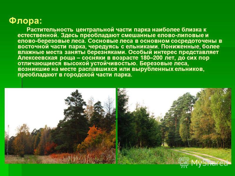 Флора: Растительность центральной части парка наиболее близка к естественной. Здесь преобладают смешанные елово-липовые и елово-березовые леса. Сосновые леса в основном сосредоточены в восточной части парка, чередуясь с ельниками. Пониженные, более в