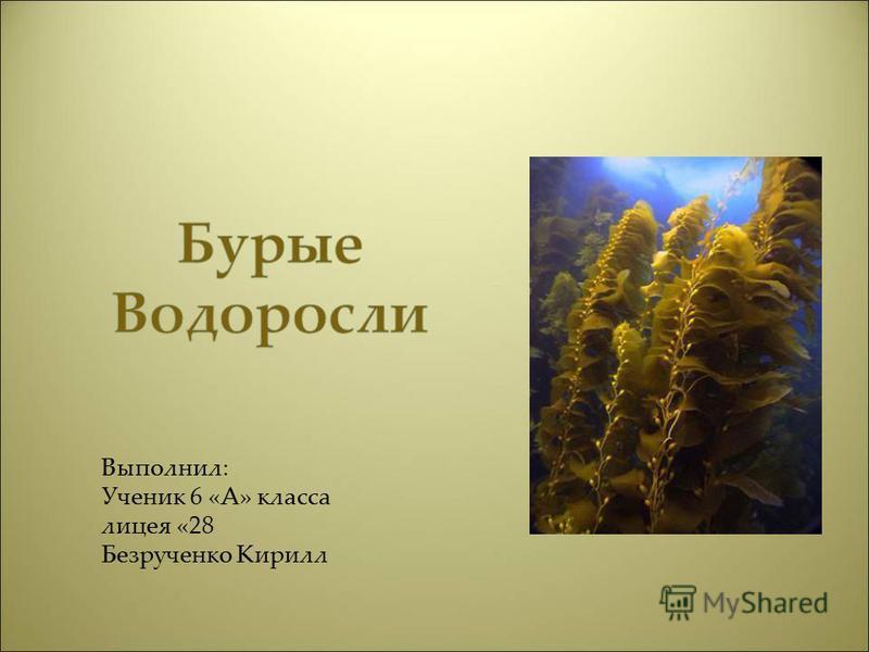Выполнил: Ученик 6 «А» класса лицея «28 Безрученко Кирилл