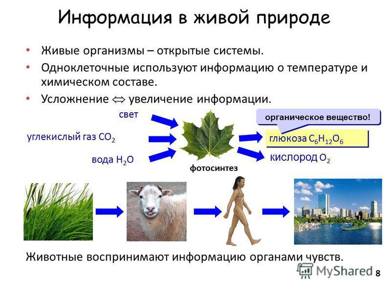8 Информация в живой природе Живые организмы – открытые системы. Одноклеточные используют информацию о температуре и химическом составе. Усложнение увеличение информации. Животные воспринимают информацию органами чувств. фотосинтез глюкоза C 6 H 12 O