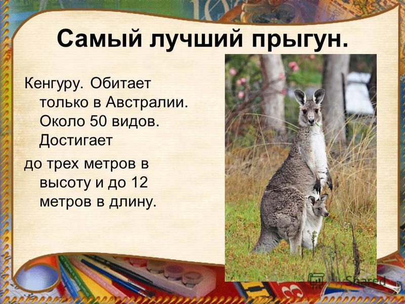 Самый лучший прыгун. Кенгуру. Обитает только в Австралии. Около 50 видов. Достигает до трех метров в высоту и до 12 метров в длину.