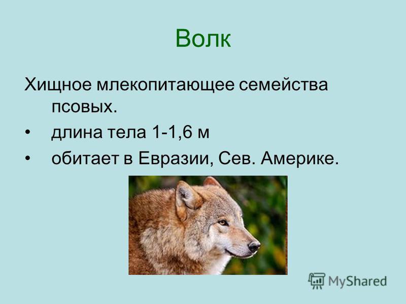 Волк Хищное млекопитающее семейства псовых. длина тела 1-1,6 м обитает в Евразии, Сев. Америке.