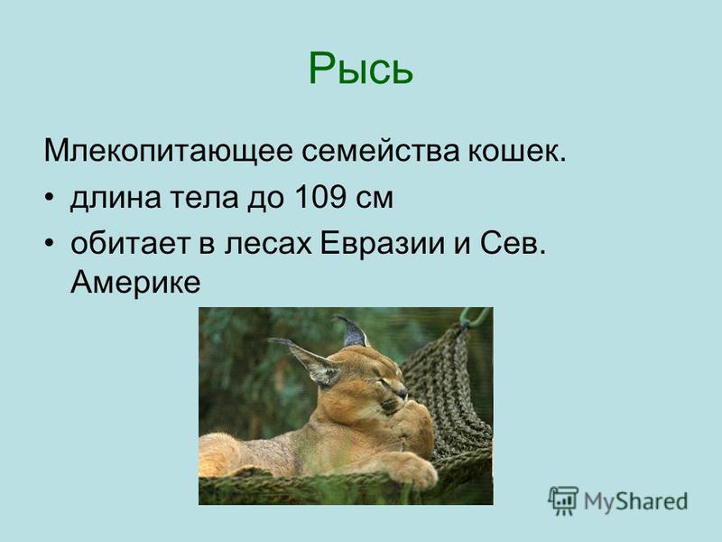 Рысь Млекопитающее семейства кошек. длина тела до 109 см обитает в лесах Евразии и Сев. Америке