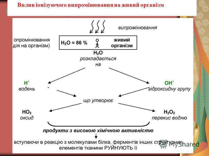 Вплив іонізуючого випромінювання на живий організмгідроксильну групу Вплив іонізуючого випромінювання на живий організм