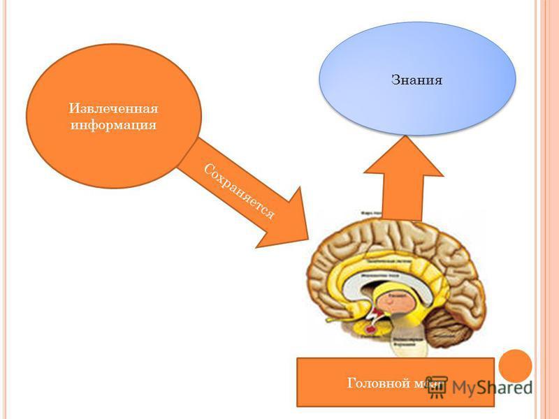 Извлеченная информация Сохраняется Головной мозг Знания