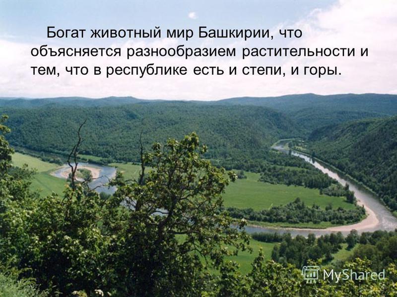 Богат животный мир Башкирии, что объясняется разнообразием растительности и тем, что в республике есть и степи, и горы.