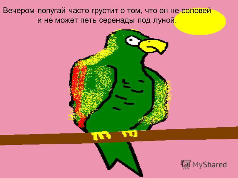 Вечером попугай часто грустит о том, что он не соловей и не может петь серенады под луной.