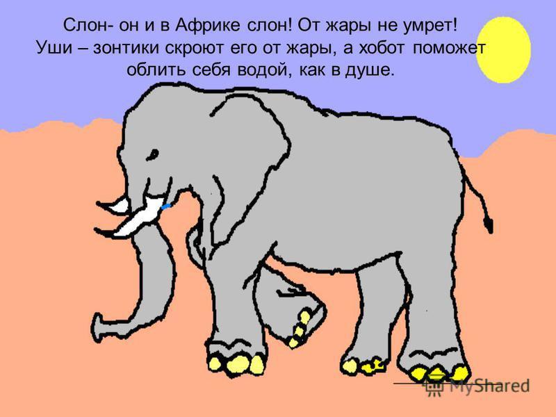 Слон- он и в Африке слон! От жары не умрет! Уши – зонтики скроют его от жары, а хобот поможет облить себя водой, как в душе.