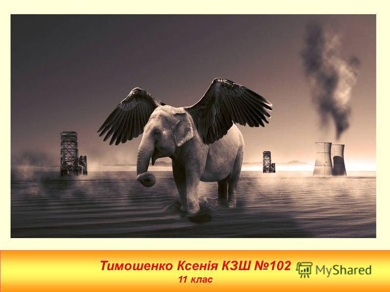 Тимошенко Ксенія КЗШ 102 11 клас