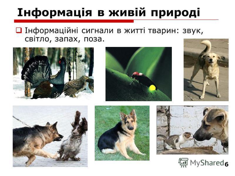 6 Інформація в живій природі Інформаційні сигнали в житті тварин: звук, світло, запах, поза.