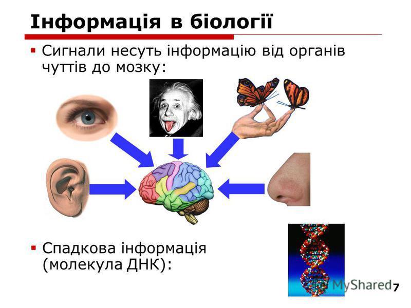 7 Інформація в біології Сигнали несуть інформацію від органів чуттів до мозку: Спадкова інформація (молекула ДНК):
