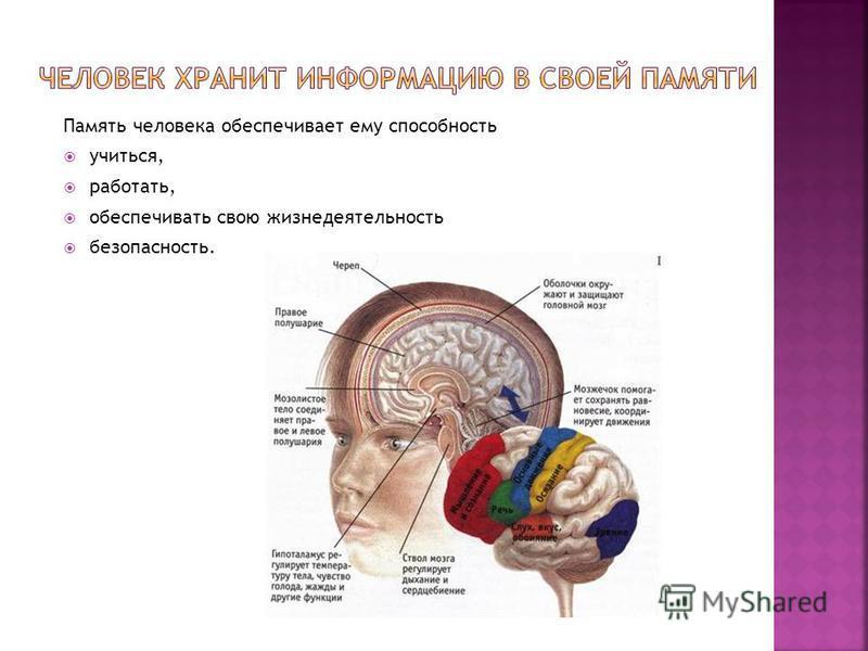 Память человека обеспечивает ему способность учиться, работать, обеспечивать свою жизнедеятельность безопасность.