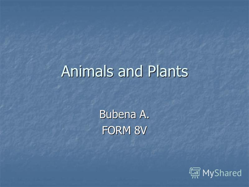 Animals and Plants Bubena A. FORM 8V