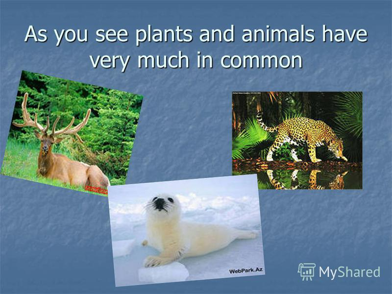 As you see plants and animals have very much in common
