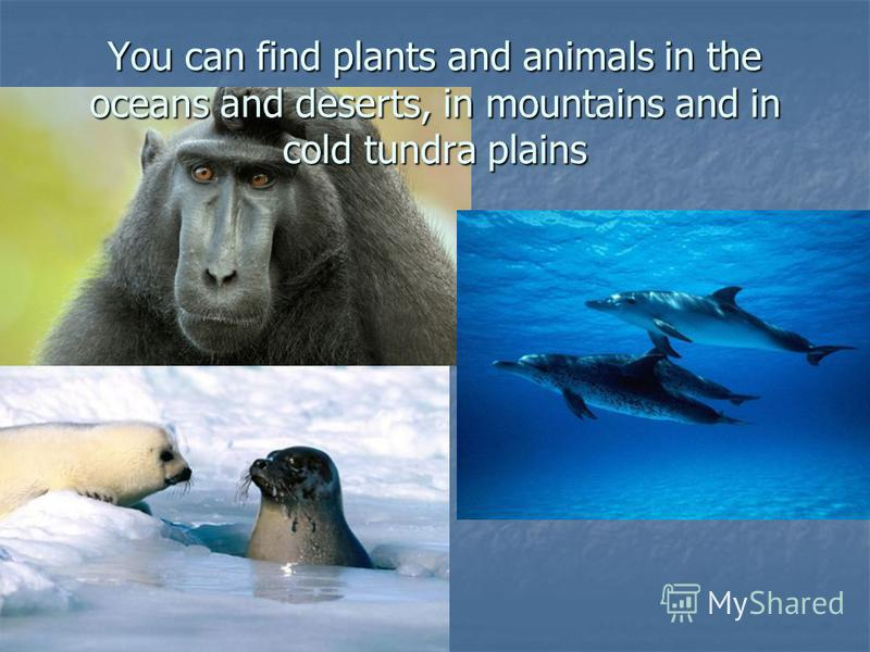 You can find plants and animals in the oceans and deserts, in mountains and in cold tundra plains