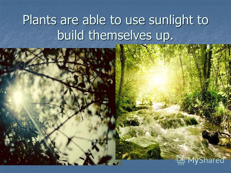 Plants are able to use sunlight to build themselves up.