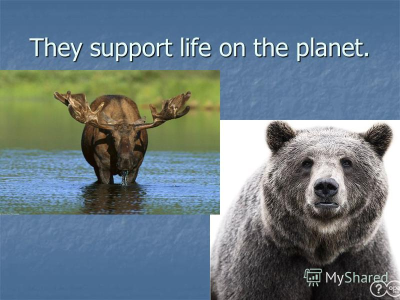 They support life on the planet.
