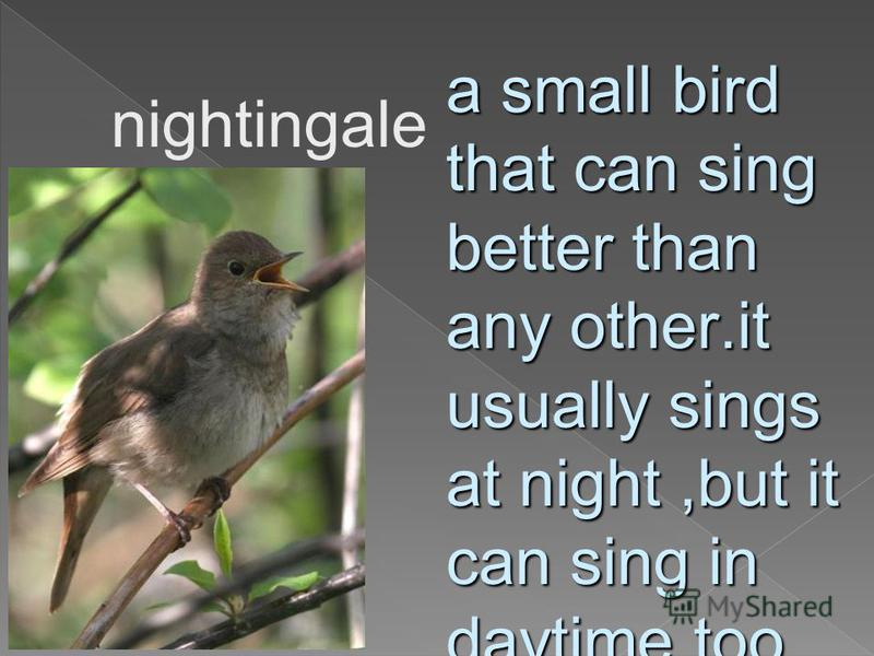 nightingale a small bird that can sing better than any other.it usually sings at night,but it can sing in daytime too