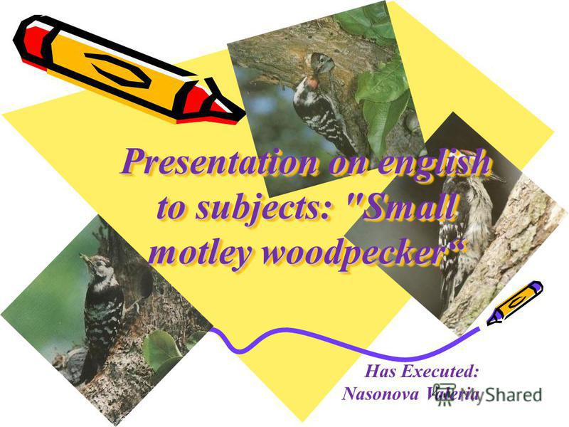Presentation on english to subjects: Small motley woodpecker Has Executed: Nasonova Valeria