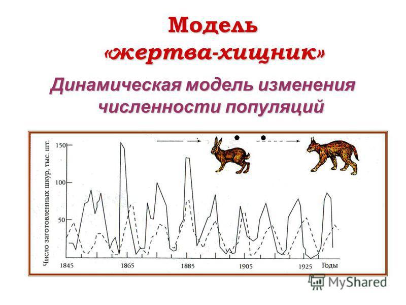 Модель «жертва-хищник» Динамическая модель изменения численности популяций