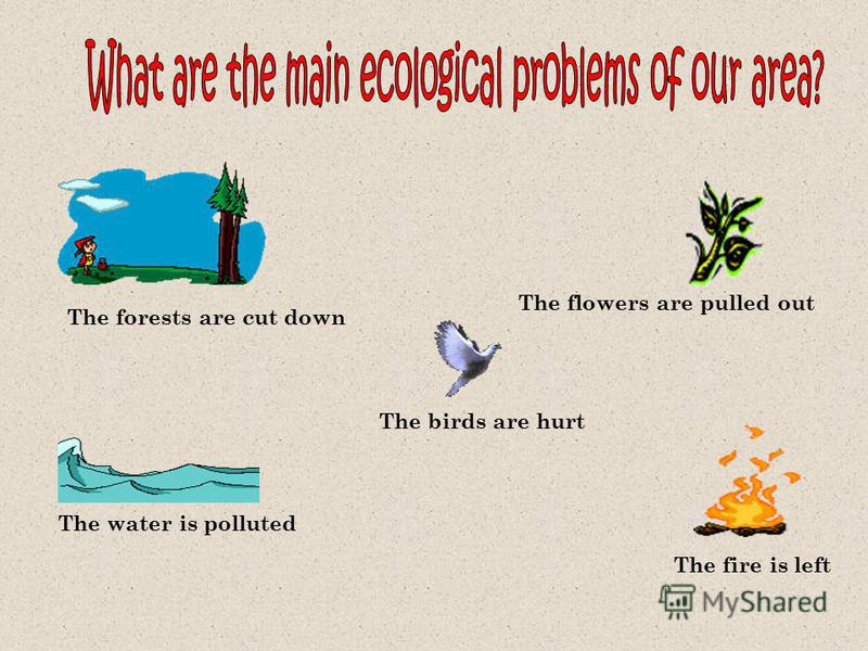 The forests are cut down The water is polluted The fire is left The flowers are pulled out The birds are hurt