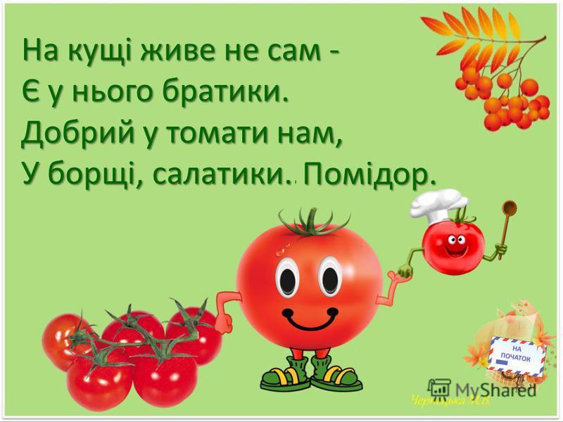 На кущі живе не сам - Є у нього братики. Добрий у томати нам, У борщі, салатики.... Помідор.