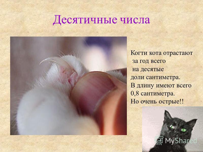 Десятичные числа Когти кота отрастают за год всего на десятые доли сантиметра. В длину имеют всего 0,8 сантиметра. Но очень острые!!