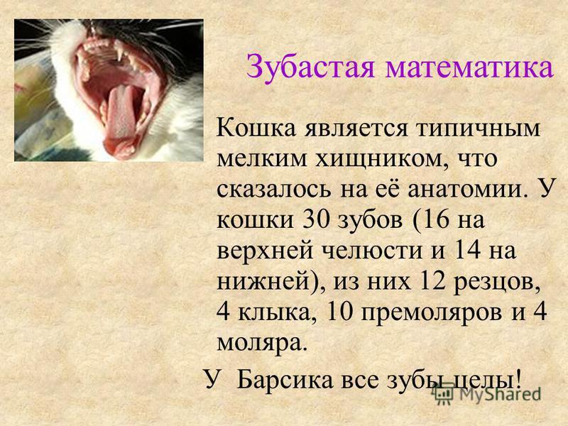 Кошка является типичным мелким хищником, что сказалось на её анатомии. У кошки 30 зубов (16 на верхней челюсти и 14 на нижней), из них 12 резцов, 4 клыка, 10 премоляров и 4 моляра. У Барсика все зубы целы! Зубастая математика