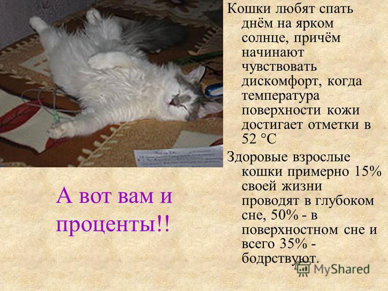 Кошки любят спать днём на ярком солнце, причём начинают чувствовать дискомфорт, когда температура поверхности кожи достигает отметки в 52 °C Здоровые взрослые кошки примерно 15% своей жизни проводят в глубоком сне, 50% - в поверхностном сне и всего 3