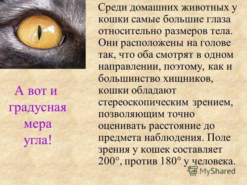 Среди домашних животных у кошки самые большие глаза относительно размеров тела. Они расположены на голове так, что оба смотрят в одном направлении, поэтому, как и большинство хищников, кошки обладают стереоскопическим зрением, позволяющим точно оцени