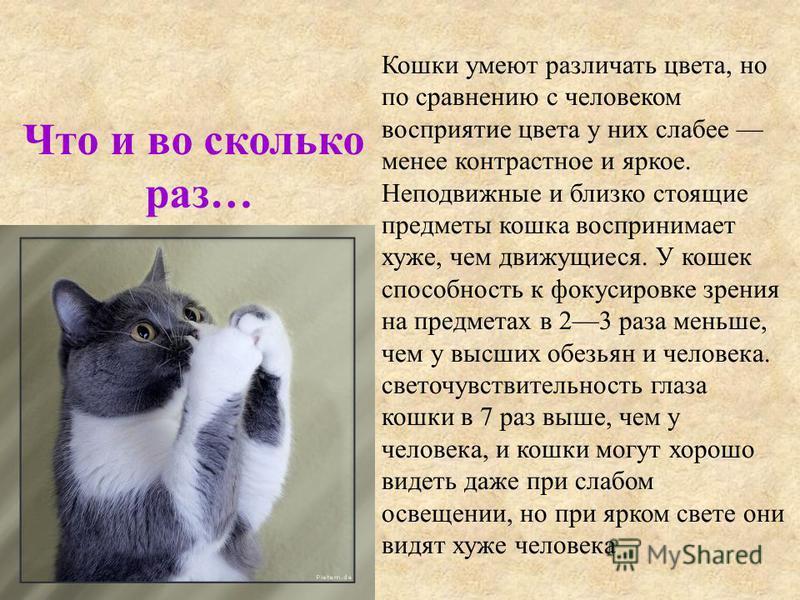 Кошки умеют различать цвета, но по сравнению с человеком восприятие цвета у них слабее менее контрастное и яркое. Неподвижные и близко стоящие предметы кошка воспринимает хуже, чем движущиеся. У кошек способность к фокусировке зрения на предметах в 2