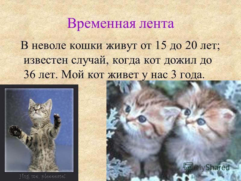 Временная лента В неволе кошки живут от 15 до 20 лет; известен случай, когда кот дожил до 36 лет. Мой кот живет у нас 3 года.