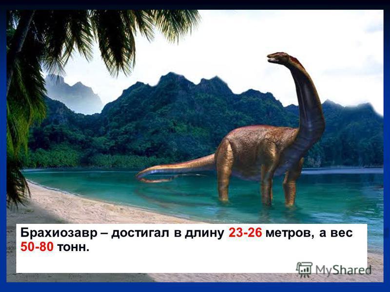 Брахиозавр – достигал в длину 23-26 метров, а вес 50-80 тонн.