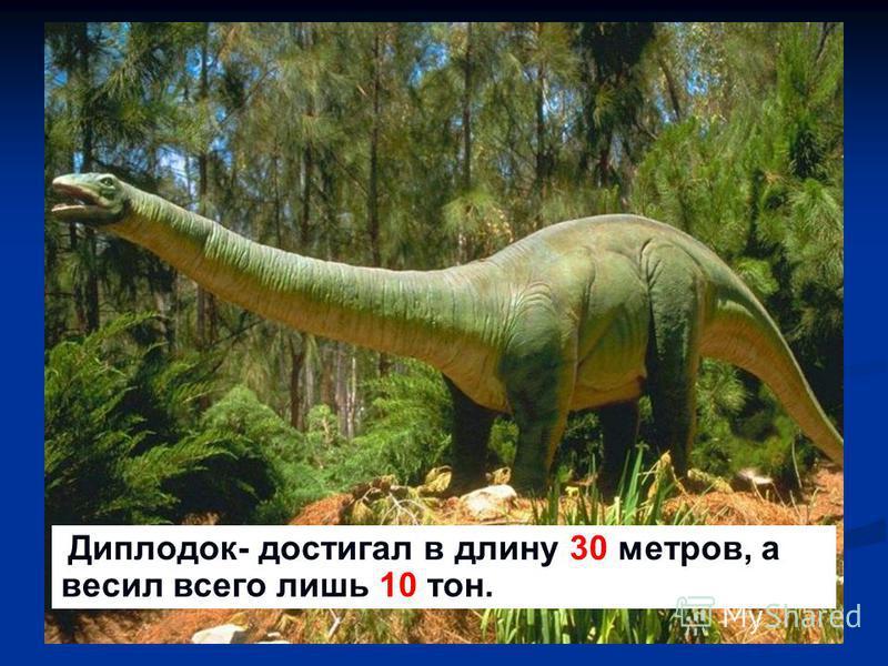 -Диплодок-достигал в длину 30 метро, а весил всего лишь 10 тон. - Диплодок- достигал в длину 30 метров, а весил всего лишь 10 тон.