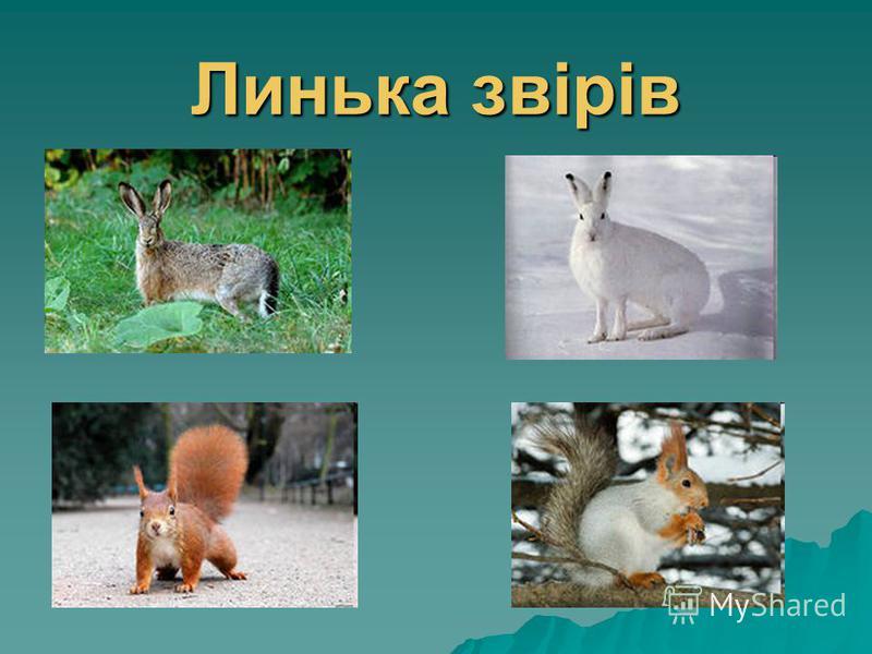 Линька звірів
