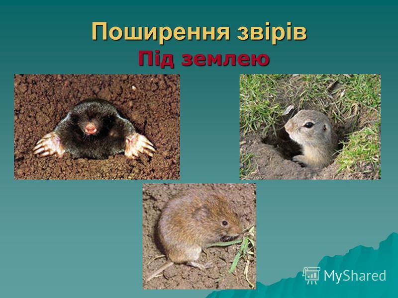 Поширення звірів Під землею