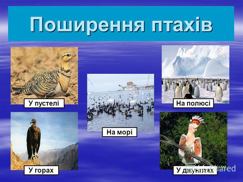Поширення птахів У пустелі У горах На морі У джунглях На полюсі