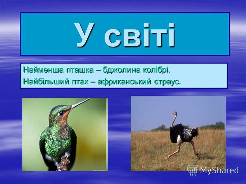 У світі Найменша пташка – бджолина колібрі. Найбільший птах – африканський страус.