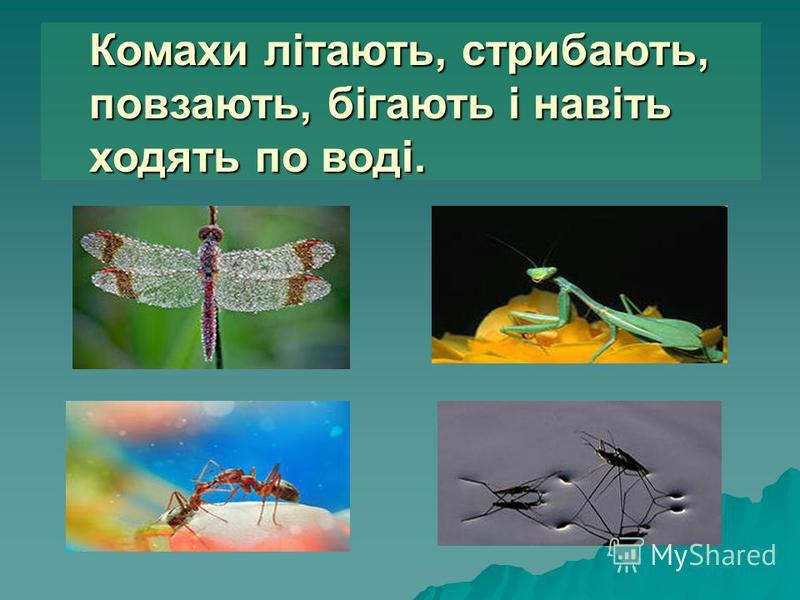 Комахи літають, стрибають, повзають, бігають і навіть ходять по воді.