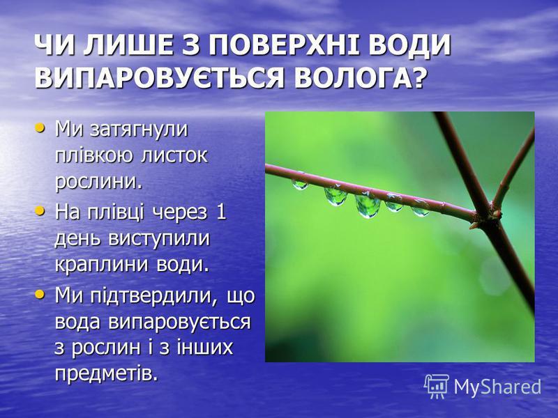 ЧИ ЛИШЕ З ПОВЕРХНІ ВОДИ ВИПАРОВУЄТЬСЯ ВОЛОГА? Ми затягнули плівкою листок рослини. Ми затягнули плівкою листок рослини. На плівці через 1 день виступили краплини води. На плівці через 1 день виступили краплини води. Ми підтвердили, що вода випаровуєт