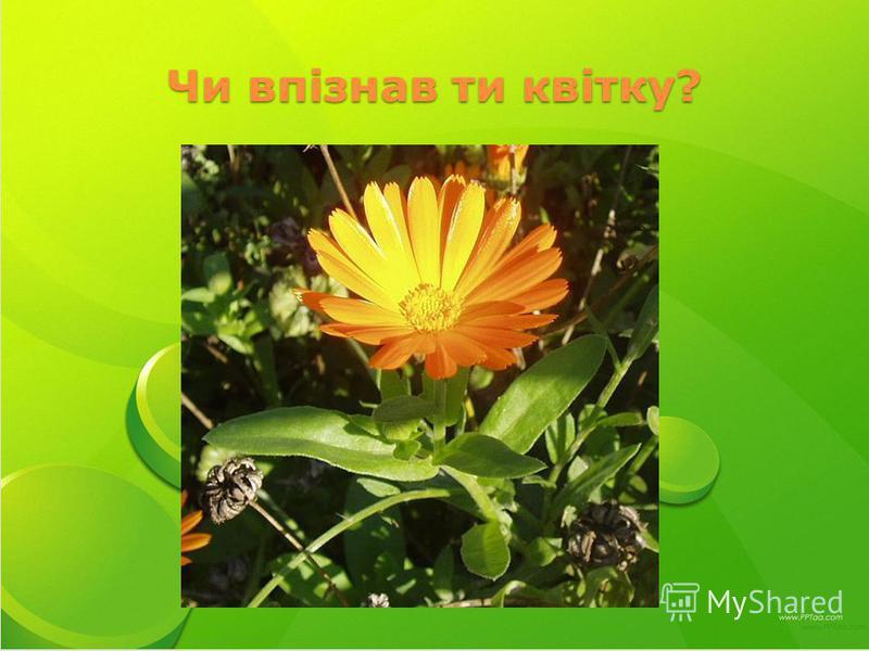 Чи впізнав ти квітку?