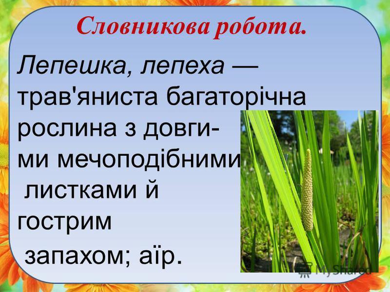 Словникова робота. Лепешка, лепеха трав'яниста багаторічна рослина з довги- ми мечоподібними листками й гострим запахом; аїр.