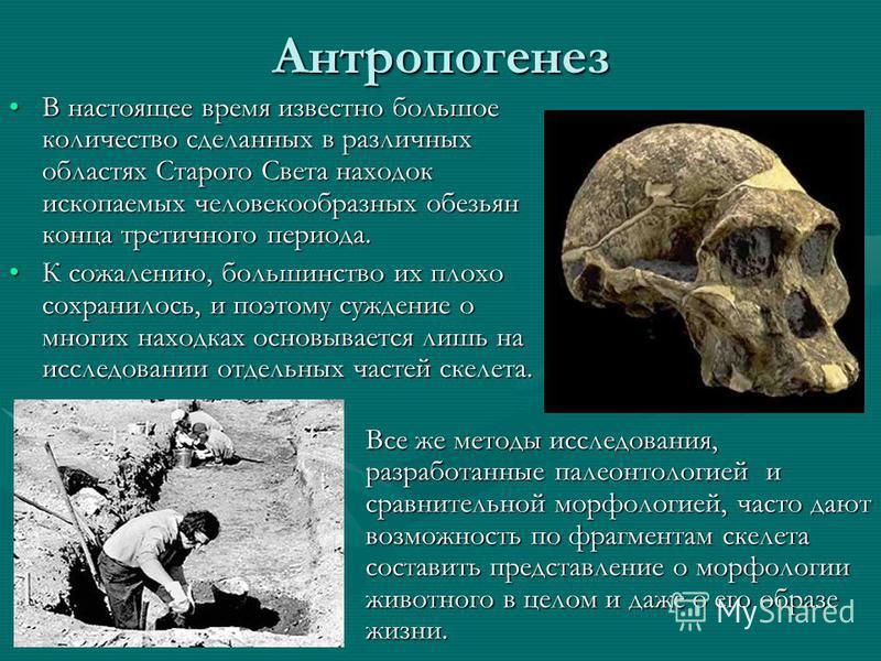 Антропогенез В настоящее время известно большое количество сделанных в различных областях Старого Света находок ископаемых человекообразных обезьян конца третичного периода.В настоящее время известно большое количество сделанных в различных областях