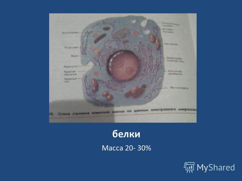 белки Масса 20- 30%