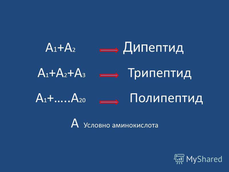 А 1 +А 2 Дип пептид А 1 +А 2 +А 3 Триппептид А 1 +…..А 20 Полиппептид А Условно аминокислота